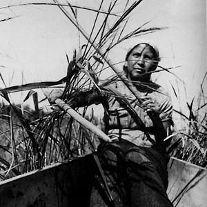 Wild Rice Harvesting (Lac Court Oreilles, WI)
