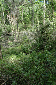 4 April, 4:14pm Looking a bit left, across the ravine.