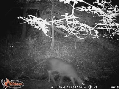 Trail Cam October '14