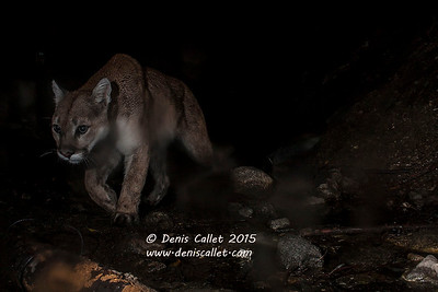Mtn Lion (Remote Capture)