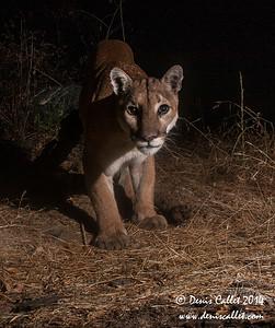 Mtn Lion (Remote Capture)