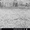 STC_0046   six-point buck under camera when it was raining