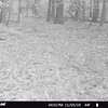 STC_0157   small spike buck walking by at 4 55 p m