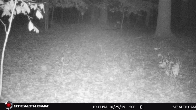 STC_0079   big doe at 10 16 p m
