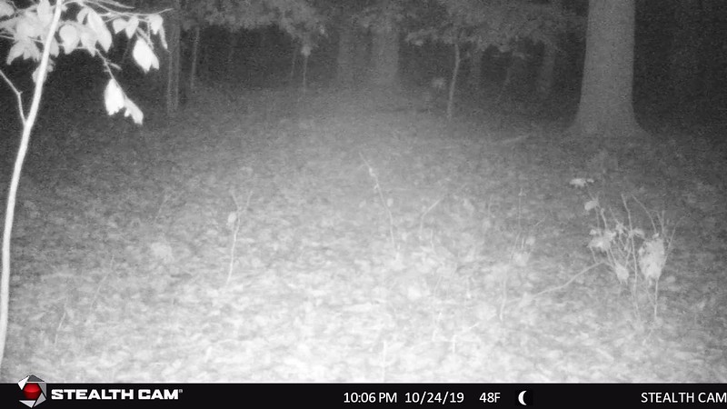 STC_0074   fawn at 10 05 p m