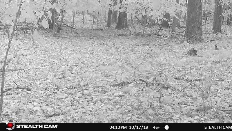 STC_0047   six-point buck under camera when it was raining