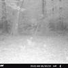 STC_0020   animal smelling camera
