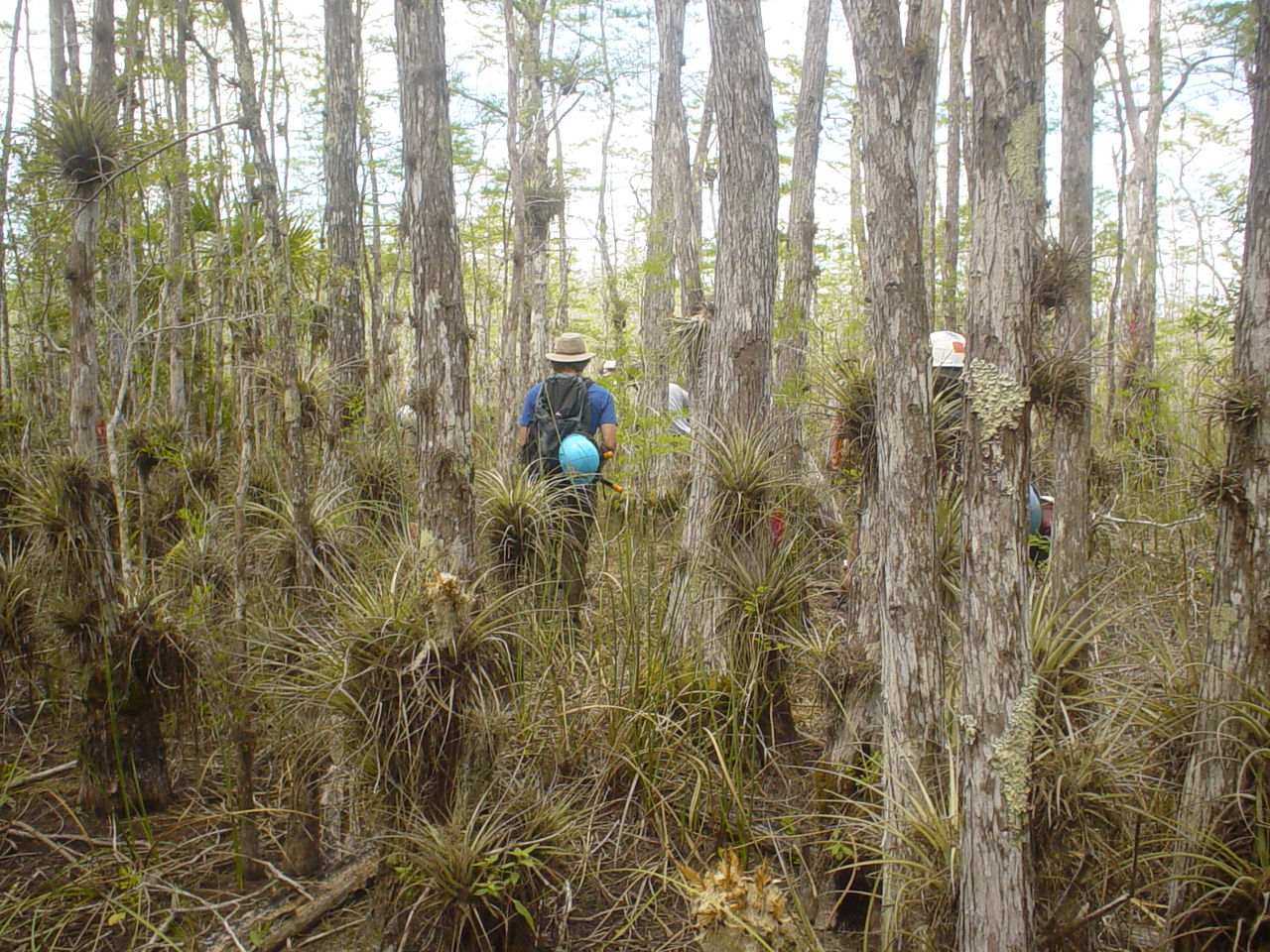 Bromeliad wonderland