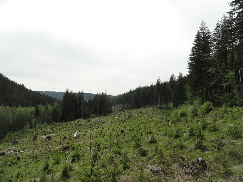 A clear cut meadow freckled with tree stumps. Along Mount Molly Porter #3.