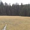Nice meadow along 941.
