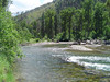 You can sit down in the shade under the Big Pine and eat lunch right along the banks of Fish Creek. I love Montana.