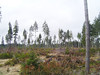 """Lot's of clear cut in the """"Secret Forest""""."""