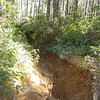 This gulley was in much better shape last month before they ran the enduro through here.