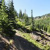 We followed Little Creek Basin to Northridge Trail (1321). Here is a section of NorthRidge heading toward Greek Creek.