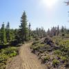 Immediately hopped on Cle Elum Ridge Trail 1326 going counter clockwise.