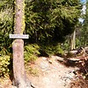 Made it to the intersection of the Iron Bear Trail (1351).