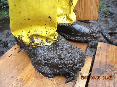 Standard Bog Footwear
