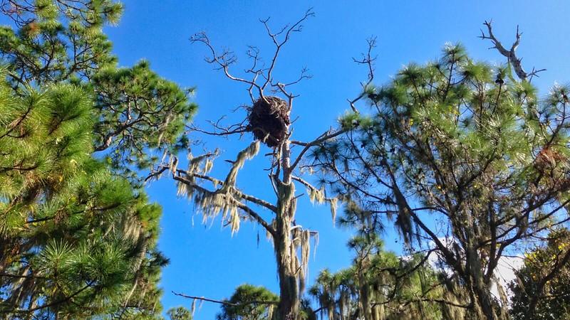 Eagle nest Cedar Point