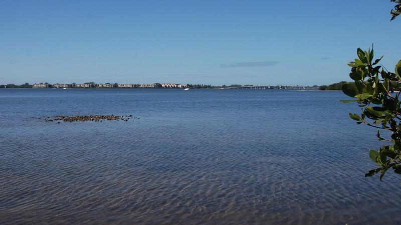 oysters Lemon Bay