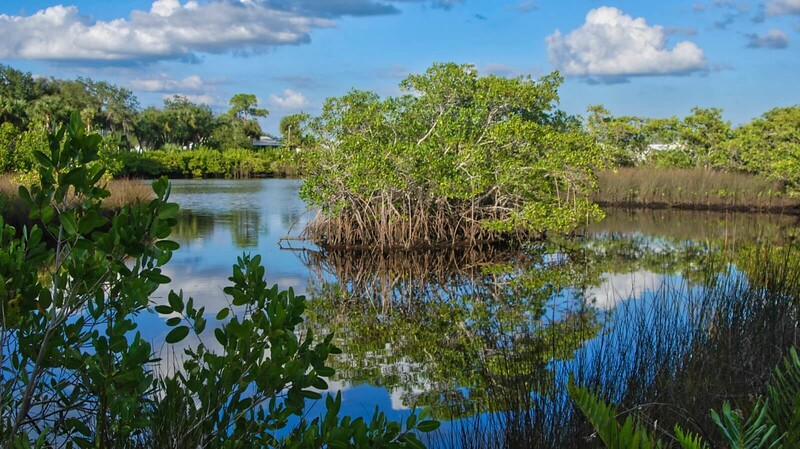 Alligator Creek Punta Gorda
