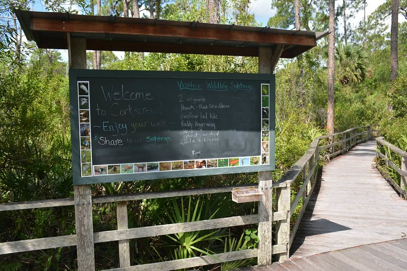 wildlife sightings board
