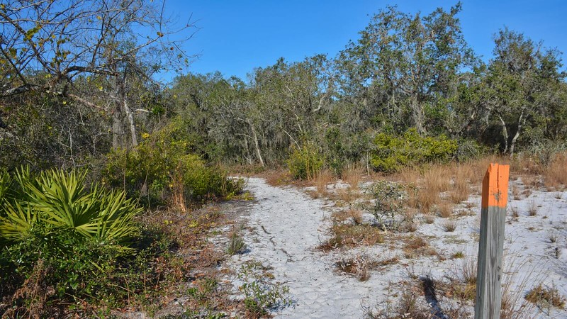 Lake Wales Ridge Scrub