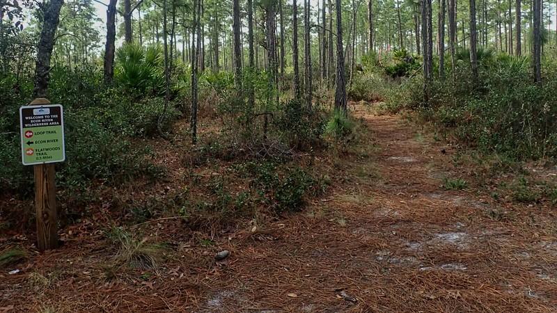 Flatwoods Trail