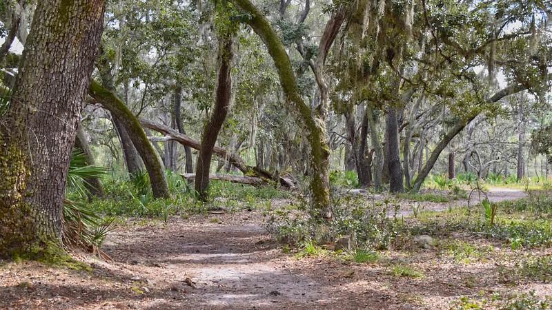 Trail through oaks