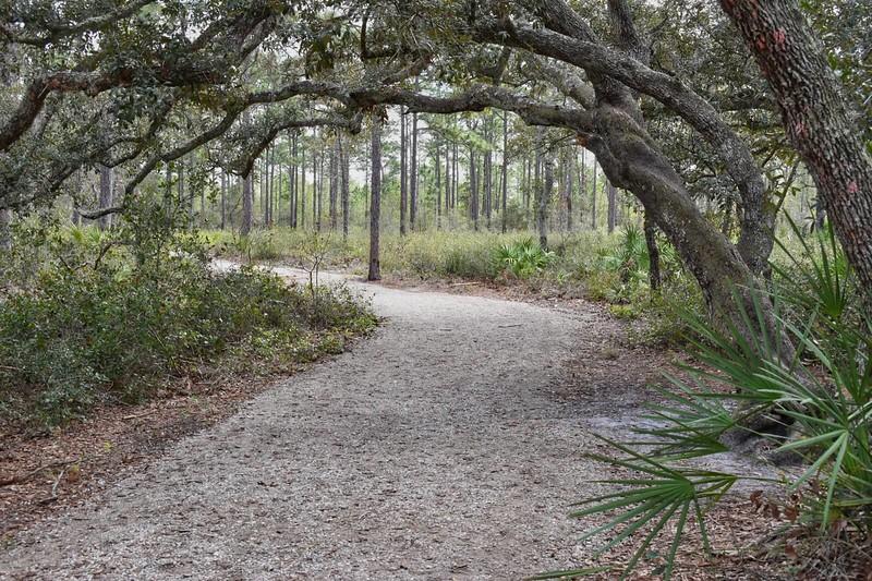 Sand live oak arch