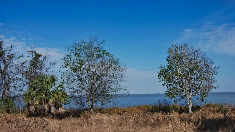 Ferndale Preserve shoreline Lake Apopka