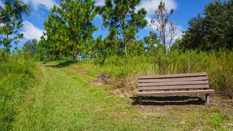 Park bench on a grassy slope in front of pine trees