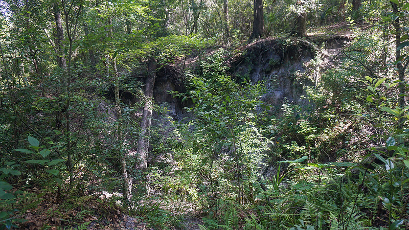 Eroded ravine topped with trees