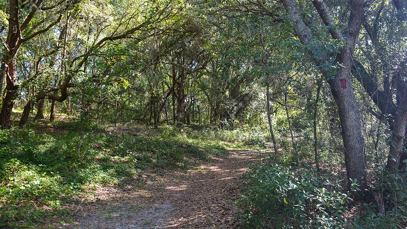 Red-blazed trail in laurel oak forest