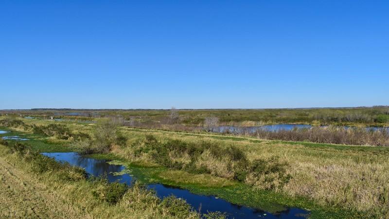 View across wetlands