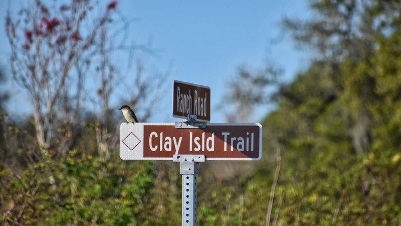 Songbird on sign