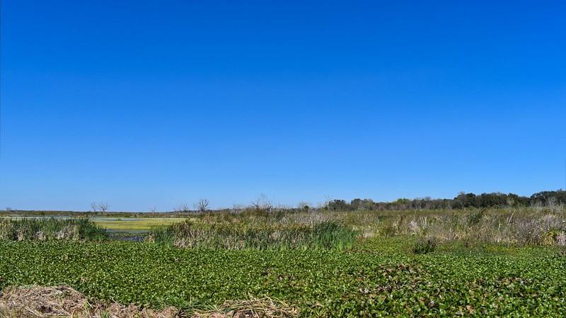 Lake Apopka green nutrients