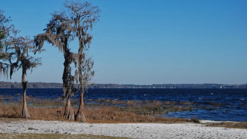 Lake Louisa shoreline
