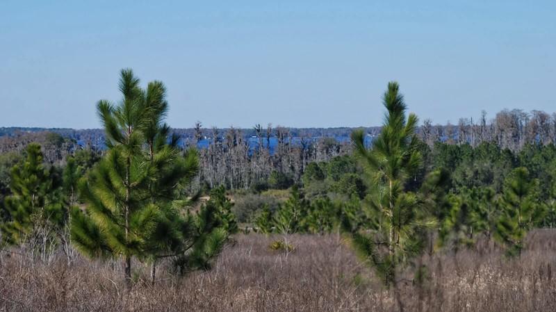 Lake Louisa Wilderness Point