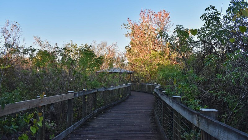 Lake Apopka Boardwalk