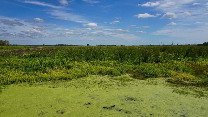 inflow marsh