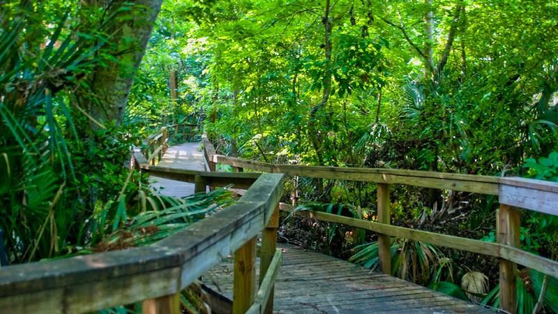 Cypress Tree Boardwalk, 2009