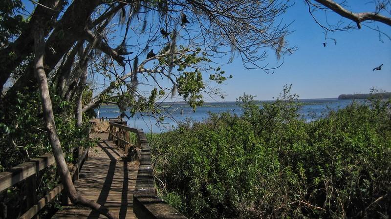 Lake Jesup Boardwalk