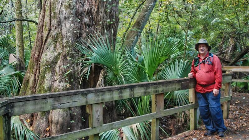 Cypress Tree Boardwalk
