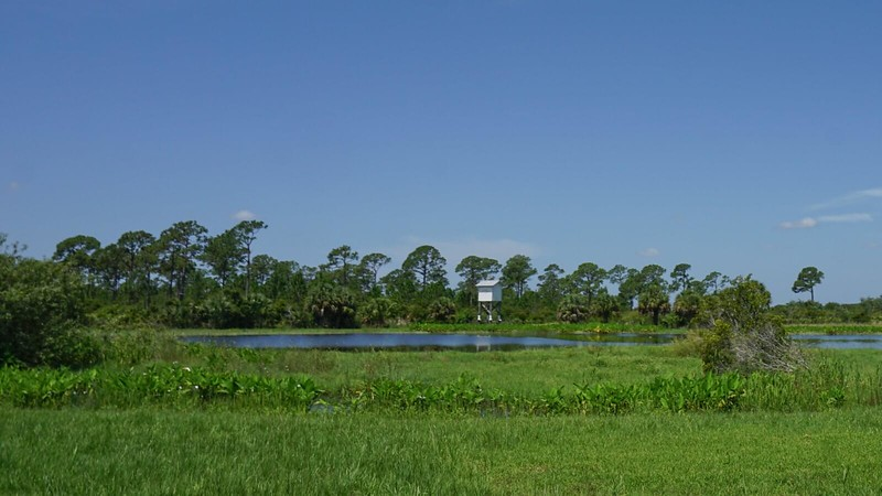 pond and bat house