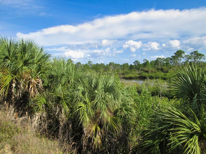 Sam Knight Creek marshes