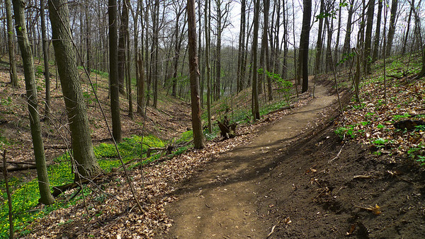 New Trail #3