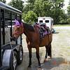 Cathy's horse Chowderhouse.