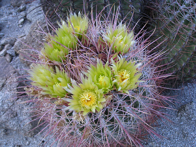 Art Smith Trail Run, Santa Rosa Mountains, Palm Desert  2.23.08