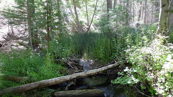 Run along the Santa Ana River Trail - San Bernardino National Forest 7.26.09