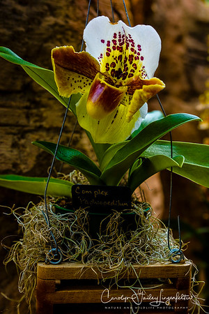 Orchid Mania 2017